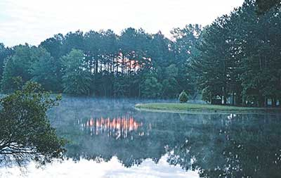 White Oak Sunrise